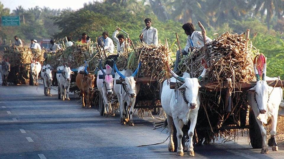 Sugarcane cultivators to stage Statewide stir on November 2