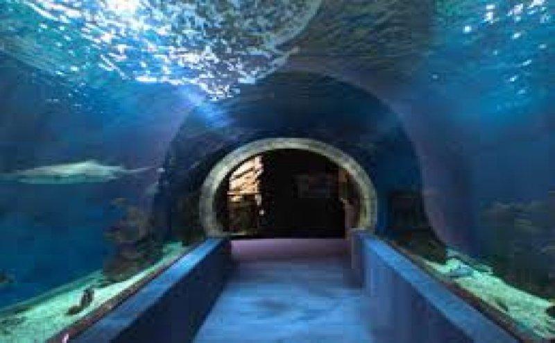 Oceanarium to give Vizag 360° view of marine life