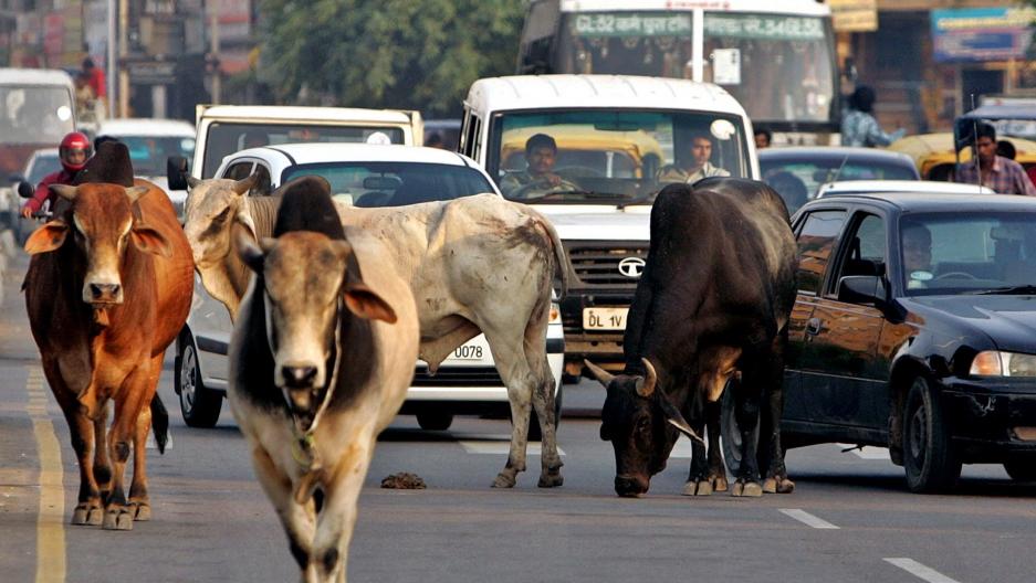 Two farmers killed by stray bulls in Budaun, Kehri district