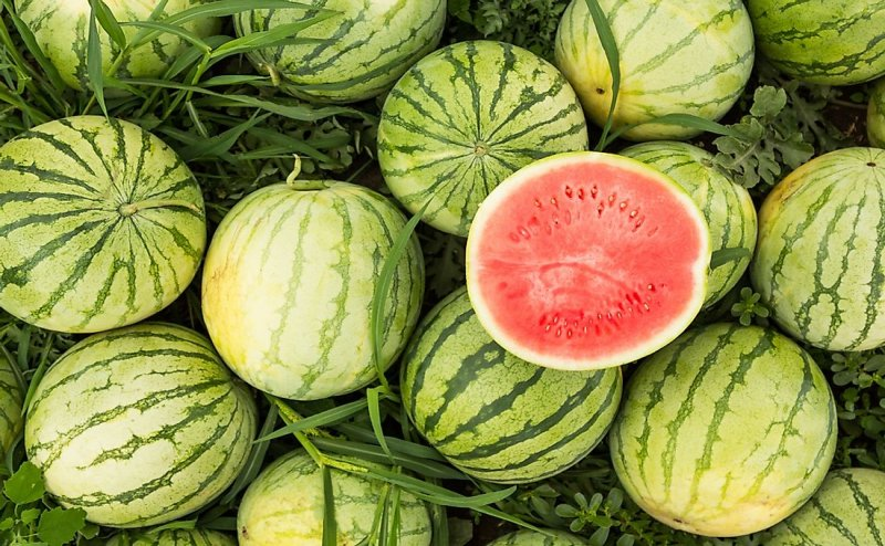 Farmer unable to sell his 5 ton of watermelon, Army man buys the bulk: Jharkhand