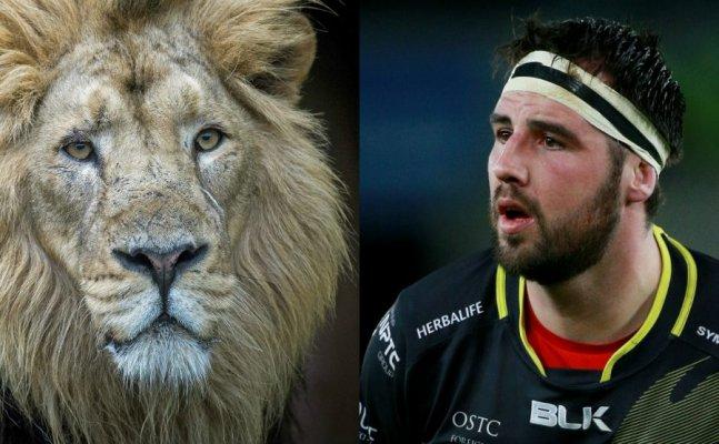Watch: Wale international Rugby player bitten by lion