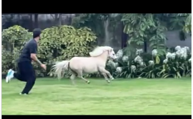 Watch: MS Dhoni races with a white horse in his Ranchi farmhouse, who will win?